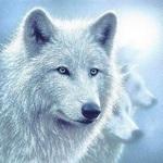 *Wolf*