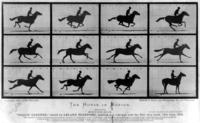 The_Horse_in_Motion.thumb.jpg.4adf6ed890866967fddbfc7ee6155593.jpg